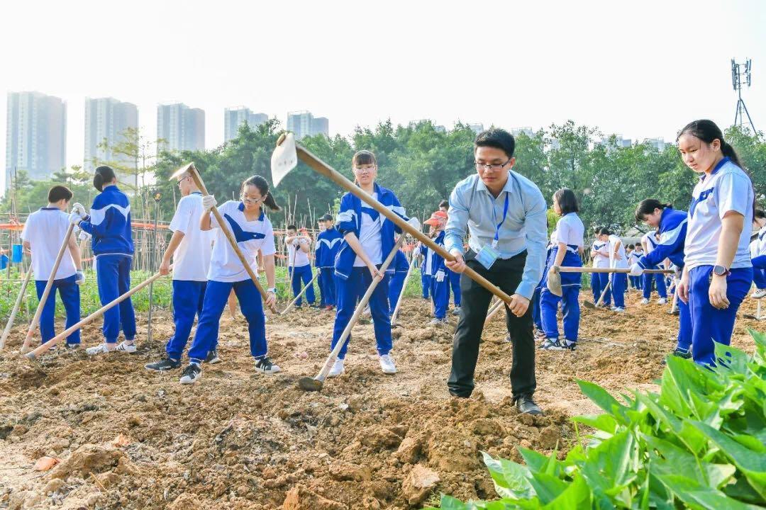 广州市第四中学学生下地体验挖红薯